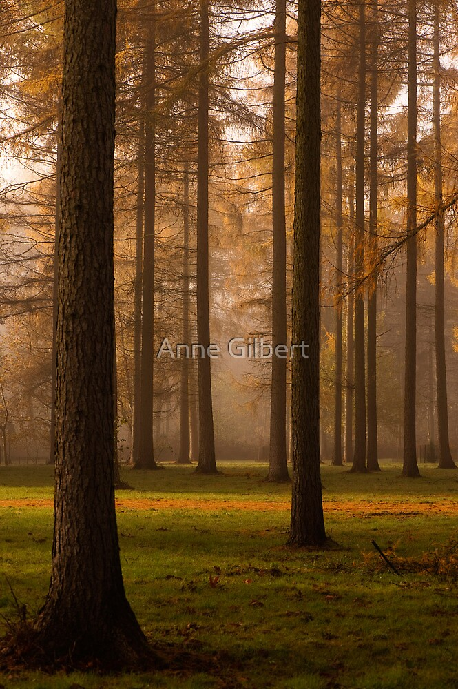 Larch Grove by Anne Gilbert