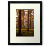 Larch Grove Framed Print