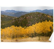 Colorado Aspen Autumn View Looking Out Poster