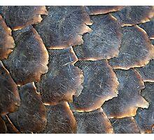 Pangolin Scales Photographic Print