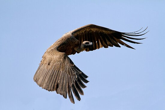 I Am Much Better Looking In Flight by Michael  Moss