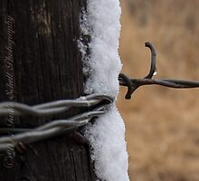 Barb Wire Detail by mountainturtle