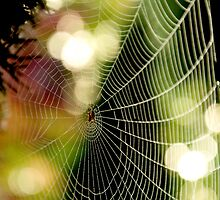 Colored Web by Rebecca Lefferts