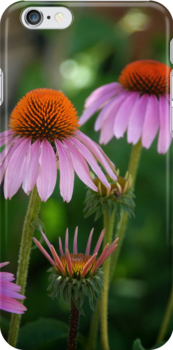 Cone Flowers - iPhone Case by Colleen Drew