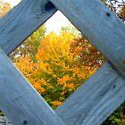 A Peek @ Fall II by Deb  Badt-Covell