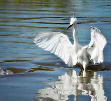 Snowy Egret Ballet by Saija  Lehtonen