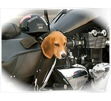 Doggy Bag for Bikers Poster