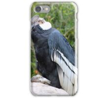Male Andean Condor Perched on a Rock iPhone Case/Skin