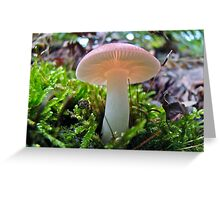 Pink Blushing Mushroom Greeting Card
