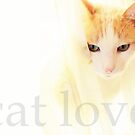 Cat Love... by LindaR