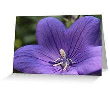 Balloon Flower Greeting Card