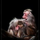 Baboons by ArtX