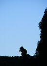 Squirrel Silhouette by elasita