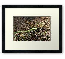 Green Racer Framed Print