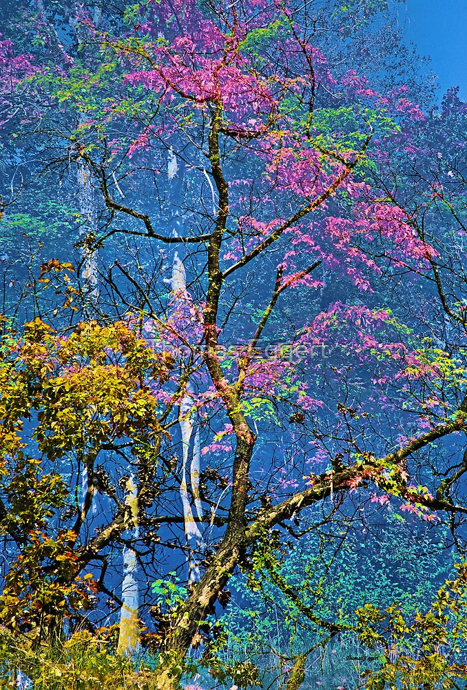 Fall Colors by Thomas Eggert
