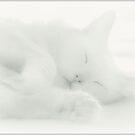 What Lies Beneath Dreams? by Scott Mitchell