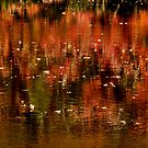 Red reflections by jrier