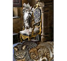⊱✿ ✿⊰⊹ I Just Can't Wait 2 B King Cat iPhone Case ⊱✿ ✿⊰⊹ by ✿✿ Bonita ✿✿ ђєℓℓσ