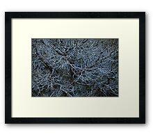 Branching Tree Framed Print