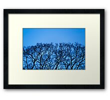 Tree Form / Growth Framed Print