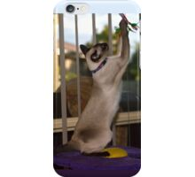 Tequilla the Siamese - iPhone case iPhone Case/Skin