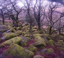 Wistman's Wood - Dartmoor by Denise McDonald