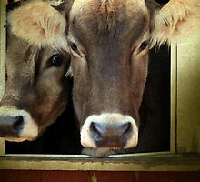 """Please Moooooove Over"" by Renee Blake"
