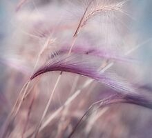 whispers in the wind by Priska Wettstein