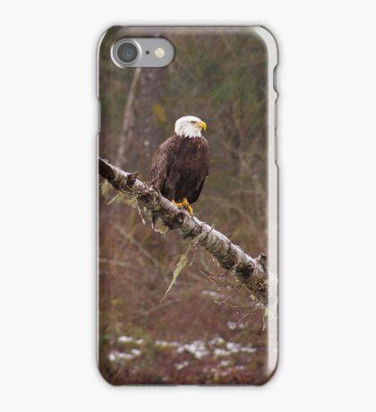 Skagit River Bald Eagle (Small) iPhone case. iPhone Case/Skin