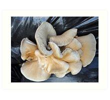 Mystery Mushrooms Art Print