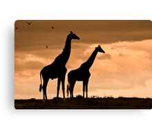 Courting Giraffe Silhouette Canvas Print