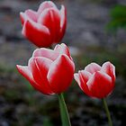 Three Tulips by Indrani Ghose