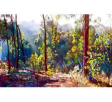 A Sparkly Bush Morning Photographic Print