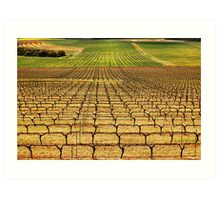 Ferngrove Vineyard Art Print