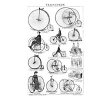 Bicycle Vintage High Wheeler Victorian Penny Farthing Cycle Biking		 Photographic Print