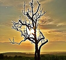 I See The Coming Of The Sun by Denise Abé