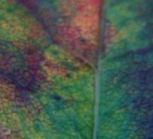 Rainbow Leaf (8444) Sticker