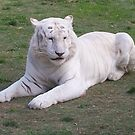 White Tiger by LESLEY B