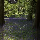 Bluebells - 1 by Trevor Kersley