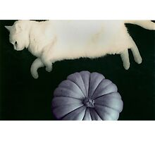 And the Cat Jumped Over the Pumpkin Photographic Print