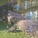 Crocs Australia by LESLEY B