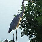 Florida Crane by tapiona