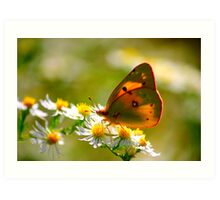Yellow butterfly on White Daisy Art Print