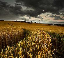 Twighlight by Brian Kerr