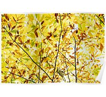 Autumnal leaves on tree Poster