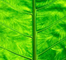 Green leaf by Sami Sarkis
