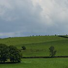 Cows on a hill by cj1970
