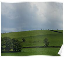Cows on a hill Poster
