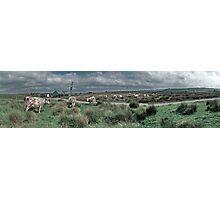 Cows - Yelland Photographic Print