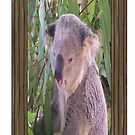 Koala (iPhone Case) by judygal